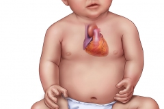 pediatric heart